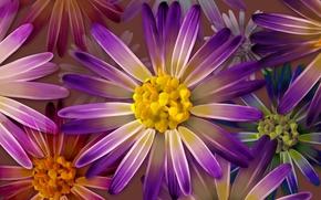 Картинка цветы, коллаж, обои, лепестки, бутон