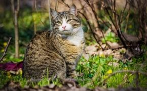 Картинка кошка, взгляд, весна
