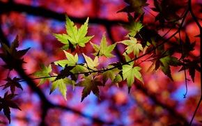 Картинка осень, листья, макро, природа, тени, веточки