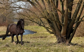 Обои лето, природа, дерево, конь