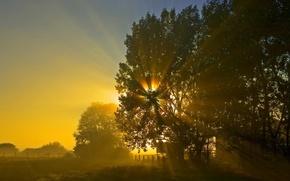 Обои дерево, солнце, восход, ночь