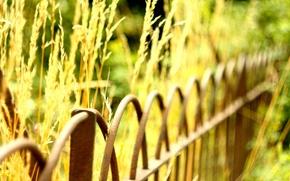 Картинка зелень, макро, фон, widescreen, обои, забор, растение, размытие, ограда, ограждение, wallpaper, широкоформатные, background, боке, полноэкранные, …