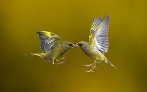Картинка птицы, фон, полёт, Flying Kiss