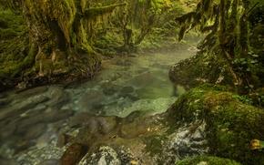 Обои камни, река, лес, деревья, заросли, ручей, мох