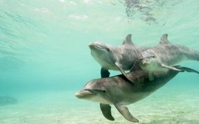 Картинка Дельфины, вода, стая, подводный мир