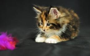 Обои взгляд, игрушка, ткань, котёнок