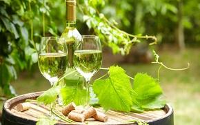 Обои зелень, листья, вино, бутылка, сад, бокалы, пробки, бочка, боке