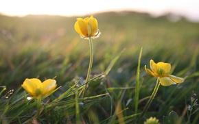 Обои поле, лето, трава, макро, свет, цветы, растения, желтые