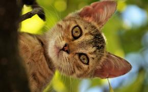 Картинка кошка, лето, кот, морда, дерево, листва, голова, котэ