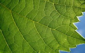 Картинка green, blue, leaf, plant