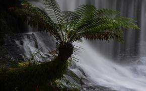 Картинка лес, листья, растение, водопад, поток