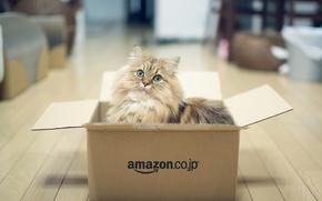 Картинка кошка, коробка, игра, Daisy, © Benjamin Torode