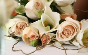 Обои цветы, романтика, розы, красиво, свадьба