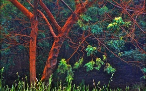 Картинка лес, трава, свет, дерево