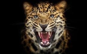 Картинка фон, леопард, рык