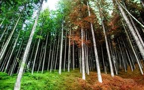 Картинка осень, лес, весна