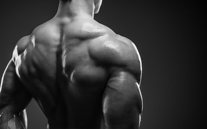 Обои bodybuilder, muscle mass, back muscles