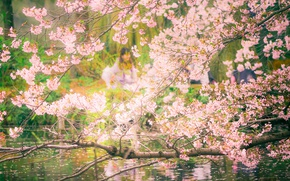 Картинка pool, flowers, tree, people, cherry blossoms, reflection, branches, mirror