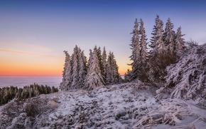 Картинка зима, облака, снег, горы, рассвет, утро, ели, вершина