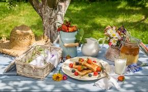 Обои milk, тосты, toast, honey, ягоды, berries, мед, завтрак, лето, лужайка, breakfast, fresh