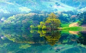 Картинка grass, forest, lake