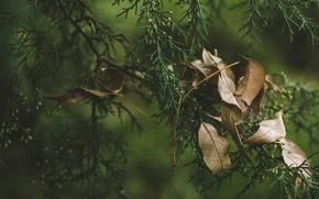 Картинка листья, ветки, сухие