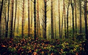 Картинка лес, листья, солнце, деревья, ветка