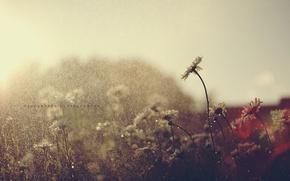 Картинка лето, капли, цветы, дождь