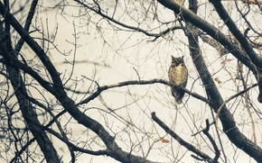Картинка ветви, рога, дерево, сова
