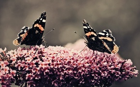Картинка цветок, бабочки, растение, красота