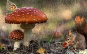 Картинка осень, лес, рендеринг, бабочка, грибы, обработка, текстура, белка, ягода, арт, мухоморы, обои от lolita777