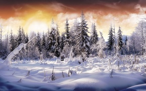 Картинка зима, лес, небо, снег, цвет, елки