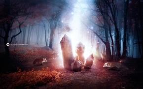 Картинка лес, магия, лисы, кристаллы, desktopography
