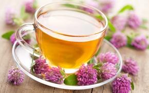 Картинка цветы, чай, чашка, клевер, напиток, блюдце