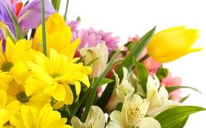 Картинка цветы, тюльпаны, белый фон, ирисы, белые хризантемы