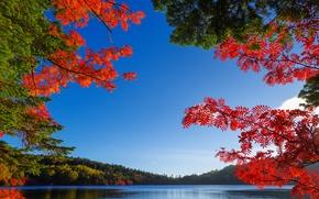 Картинка осень, небо, листья, деревья, озеро, багрянец