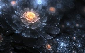 Обои night divine, flower, art, ночь, цветок