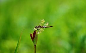 Картинка цветок, растение, стрекоза