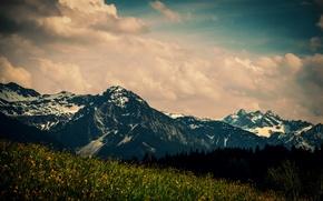 Картинка поле, облака, деревья, цветы, горы