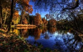 Картинка trees, water, autumn, lake, birds, branches