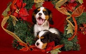 Картинка язык, собаки, украшения, красный, праздник, новый год, рождество, щенки, пасть, пара, щенок, позолота, мишура, двое, …