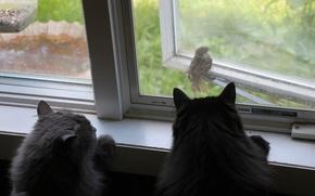 Картинка кошки, птица, коты, окно, воробей, наблюдение