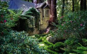 Обои деревья, парк, Калифорния, домик, США, кусты, Redwood National Park