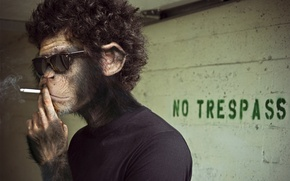 Обои дым, сигарета, обезьяна