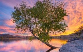 Картинка вода, закат, дерево