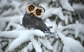 Картинка зима, сова, ель, white