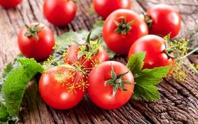 Картинка Овощи, Помидоры, Еда, Укроп