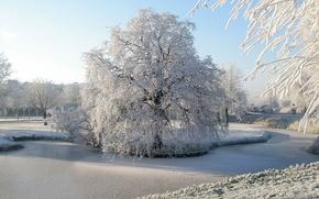 Обои парк, снег, зима, иней, деревья, Природа, река