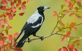 Картинка большая, перья, клюв, ветка, птица