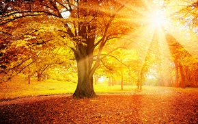 Обои дерево, лес, солнце, leaves, осень, autumn, листья